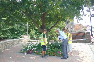 Gillingham bloom