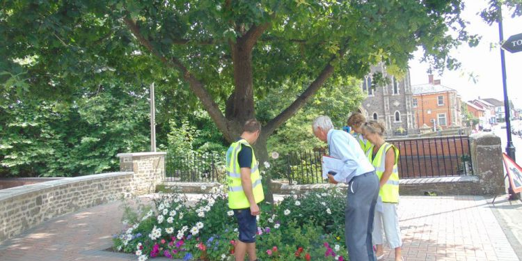 Gillingham bloom