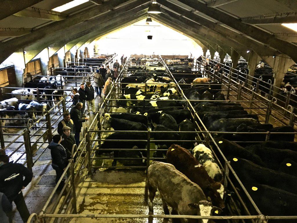 Cattle market Shaftesbury