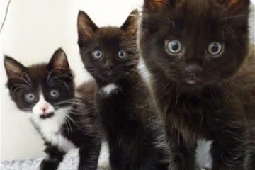 cat protection Gillingham